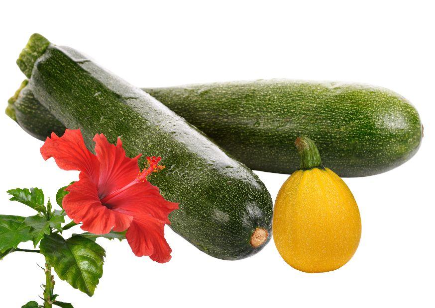 Zucchini hibiscus